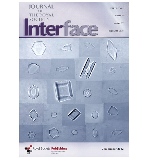 interface_dec7_2012_cover_box